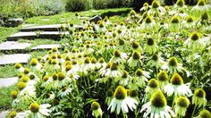 #FlowerSunburn ;-) #1P1W via http://www.1picture1word.com