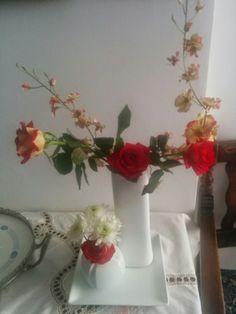 Red rosea