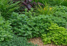 Jaké bylinky se k sobě hodí? Herb Garden, Herbs, Fruit, Vegetables, Plants, Garten, Herbs Garden, Veggies, Herb