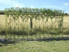 Living Willow Fedgehttp://suite101.com/article/how-to-make-a-living-willow-garden-fence-a202538