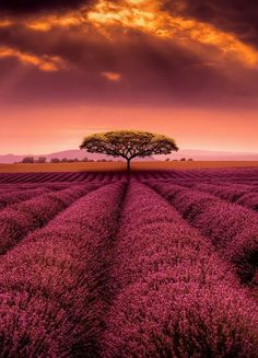 Sunset in Provence (by Alex Hill)