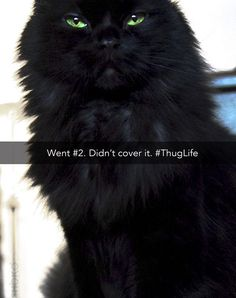 Lol =^..^= www.kittyprettygifts.com #cats #cute #lolcats #memes #kitty #kittyprettygifts