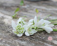 Flowers - Blomster - vintergækker - snowdrops - Havets Sus