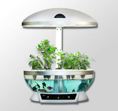 Aquaponics Home Garden Indoor Planter Fish Tank aquarium with Grow Light hydrponic system aeroponic aquaponic hydroponic grow kit fish farming aqua farm Aquaculture sustainable herb garden Hydroponic Grow Kits, Hydroponic Farming, Backyard Aquaponics, Fish Farming, Aquaponics Plants, Indoor Hydroponics, Vertical Farming, Permaculture, Aquaponics System