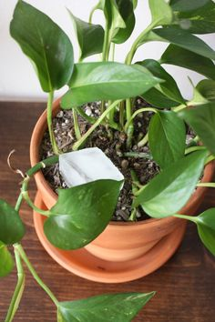 use an ice cube to water plants; especially good for hanging plants.