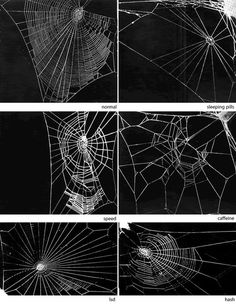 spiders do drugs.