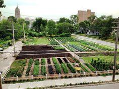 July 2014  Location: 7432 Brush St. Detroit, MI 48202 Urban Farming, Motown, Real People, Vegetable Garden, Railroad Tracks, Detroit, Real Life, Michigan, Hoop