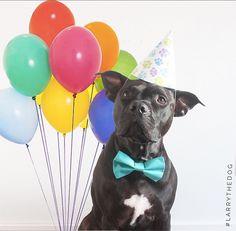 Larry the Dog https://www.instagram.com/lvrntafghtr/