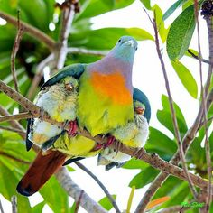 The best example of protection. #Birds