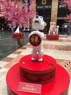 #ChineseDecorIdeas Chinese Interior, White Puppies, West Highland White, West Highland Terrier, White Terrier, Little White, Puppys, Westies, Scottie