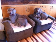 I like this idea. We all know dogs like to be on the couch. Elevate their own dog bed. :)