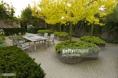 Stock Photo : Raised beds planted with Pachysandra terminalis (japanese spurge) and Catalpa var. aurea in patio area