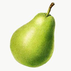 Pear Drawing, Food Png, Apple Illustration, Pixel Image, Green Grapes, Best Stocks, Red Apple, Vintage Green, Vintage Images