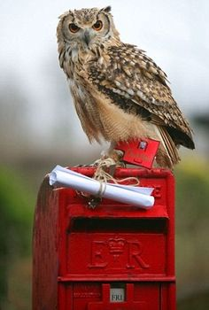 ⊙_⊙corujas - you've got mail! Owl on a red mailbox with a message. Art Postal, Owl Photos, Owl Always Love You, Beautiful Owl, Noctis, Deep Forest, Owl Bird, Mundo Animal, Birds Of Prey