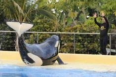 Keiko Orca, Majestic Animals, Killer Whales, Sea World, Tenerife, Marine Life, Gallery, Zoos, Aquariums