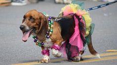 Barkus and Meoux Mardi Gras Parade!
