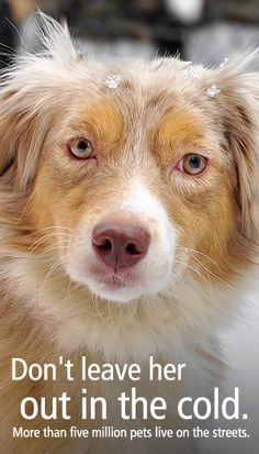 """♥ HOW TO RECOGNIZE ANIMAL CRUELTY - """"The best way to tell whether a pet is being or has been abused is to examine him and his surrounding environment. Check out our list of signs that may alert you an animal needs help."""" Website: http://www.aspca.org/Fight-Animal-Cruelty/how-to-recognize-cruelty.aspx"""