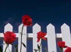 Blue Velvet, David Lynch
