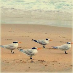 four gulls facing the wind