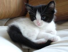 kittens for adoption in maine | Cute Cats Pictures