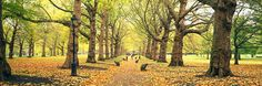 Trees Along a Footpath in Green Park London http://www.walls360.com/seasons-wall-graphics-s/2002.htm
