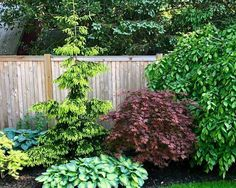 Beautiful combination of conifers and Japanese maple