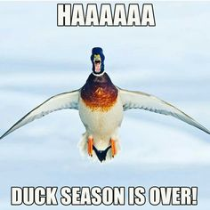 Waterfowl Obsessions Duck Shirt, Duck Season, Duck Hunting, Shirts With Sayings, Cricut, Seasons, Bird, Quotes, Projects
