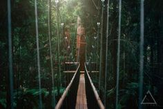 Experience the gorgeous Rotorua redwoods from up high with this treewalk experience.