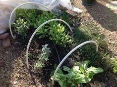 Year round herb garden