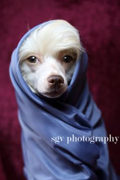 2/52 weeks of Fabulous dogs - Bundle up!   Flickr - Photo Sharing!