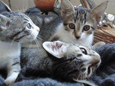 Kittens, 2012