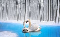 Dash Birds - free desktop backgrounds for mute swan - 1920x1200 px