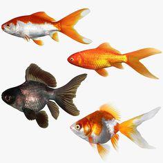 goldfish set 3d model