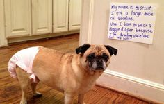 Hilarious Roundup Of 30 Guilty Dog Pics And Their Reactions To Being Busted