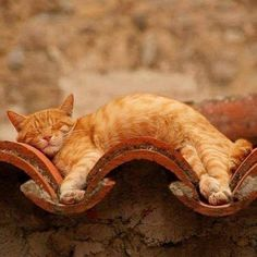 Cat sleeping on the roof. Funny Cats, Funny Animals, Cute Animals, Animal Memes, Crazy Cat Lady, Crazy Cats, I Love Cats, Cool Cats, Kittens Cutest