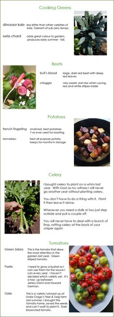 these are my 5 top picks for your vegetable garden including the varieties I'll be using | The Art of Doing Stuff