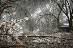 "From ""22 Amazing Photos of the Ontario Ice Storm"" story by Anthony Sagliani on Storify — http://storify.com/anthonywx/10-amazing-photos-of-the-ontario-ice-storm"