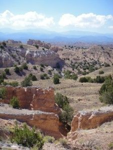 High Desert, New Mexico - Coyote country