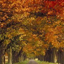 La belleza del paisaje otoñal en el estado de Virginia es un excelente motivo para visitarlo ....