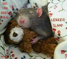 Lekker slaap....