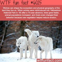Fun Facts!
