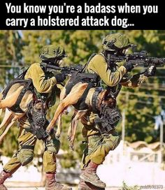 Holstered Attack Dogs.   funny pictures