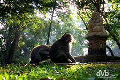 http://travel.davidmbyrne.com/monkey-forest-ubud-bali/