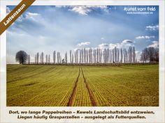 Kunst vom Feld: Lattenzaun – www.kunstvomfeld.de