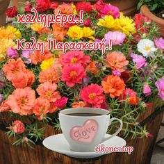 Love, Plants, Amor, El Amor, Flora, Plant
