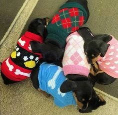 Cute sweaters for little loves ❤️