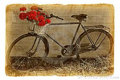 Bicycle decorated by red geraniums by Plotnikov, via Dreamstime