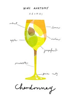 Art for wine lovers Wine Anatomy print Chardonnay by anek - $45