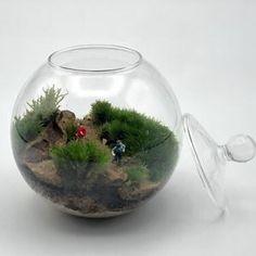Terrario de musgo vivo en bola de cristal de diámetro 10 cm. Todos los productos utilizados son naturales Natural, Home Decor, Moss Terrarium, Terrariums, Mini Gardens, Crystal Ball, Unique Gifts, Products, Crystals
