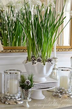 This year I put a cluster of paperwhites in a large scalloped bowl.